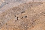 Hirten in dem kargen Land