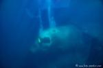 Unterwasserwelt von Aqaba - versenktes Flugzeug