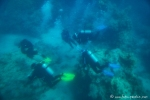 Unterwasserwelt von Aqaba - der Tauchspot in Aqaba