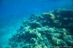 Unterwasserwelt von Aqaba - der jordanische Tauchspot im Roten Meer