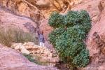 Unser Guide zeigt uns die Geheimnisse des Wadi Rum