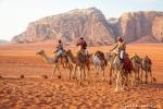 Die Kamele haben jeden Tag zu tun