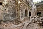 Eine der berühmten Würgefeigen im Ta Prohm Tempelkomplex