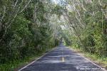 Weg nach Calakmul