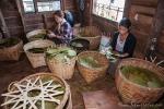 Blätter sortieren für die Cheroots, die typischen Zigarren aus Myanmar - Zigarrenmanufaktur auf dem Inle See