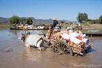 Mit Ochsenkarren werden die Boote beladen - nach dem Markt von Sagaing