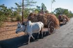 Ochsenkarren prägen das ländliche Leben