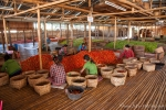 Im Tomaten-Sortierhaus von Nyaungshwe
