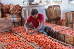 Tomaten vom Inle Lake werden im Tomatenhaus von Nyaungshwe für den Verkauf vorbereitet