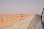 ... und da ist es schon! Wüste Rub al-Khali