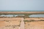 Feuchtgebiet bei Salalah