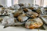 Fangfrisch, Hafen von Mirbat