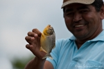Hübsch, aber mit Vorsicht zu behandeln - Piranha