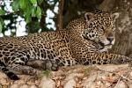 Immer den Überblick behalten - Jaguar