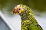 Ein ziemlich ramponierter Vogel