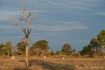 Die Trockenzeit hinterlässt in der Landschaft ihre Spuren