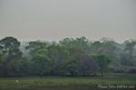 Nebel über dem Trockenregenwald