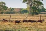 Capybaras leben auch auf der Fazenda
