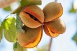 Dekorative Samenstände
