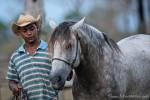 Das beste Pferd im Stall