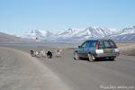 Schlittenhundetraining in Longyearbyen