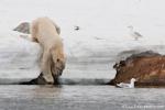 Eisbär in der Bucht von Sallyhamna auf Tauchgang