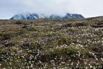 Frühling in der Arktischen Tundra