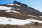 Guerilla-Angriff von zwei Fotowütigen auf ein Rentier (Rangifer tarandus) mitten in Longyearbyen