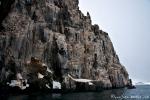 Bis zu über 100 Meter hohe Basaltklippen des