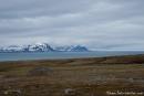 Auf Trygghamna im Isfjord