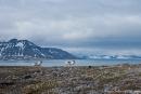 Eine großartige Kulisse am Sankt Jonsfjord