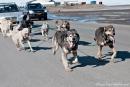 Hundeschlittentraining in Longyearbyen