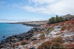Die Küste der Insel Plaza Sur