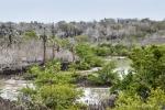 Riesenopuntien und Palo Santo-Bäume prägen das Bild an diesen Lagunen