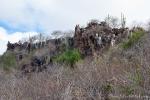 Die Palo Santo-Bäume verlieren in der trockenen Jahreszeit ihre Blätter