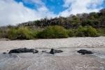 Idyllische Bucht mit feinem Sandstrand - San Cristobal