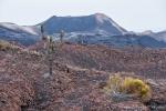 Ein paar Kakteen und ansonsten nur Mondlandschaft - Lavafelder und Vulkankegel des