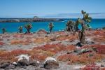 Viel Vegetation gibt es auf der Insel Plaza Sur nicht, aber malerisch ist sie dennoch
