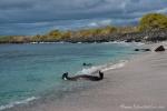 Schwimmen mit Seelöwen - Bucht auf der Insel San Cristobal