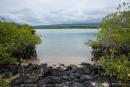 Mangroven säumen die Bucht auf der Insel Santa Cruz
