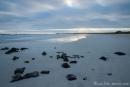 Hierher kommen die Meeresschildkröten zur Eiablage
