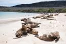 Seelöwenkolonie am Strand von Santa Fe