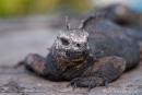 Fotostrecke Galápagos