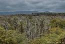 Vegetation auf der Insel Santa Cruz