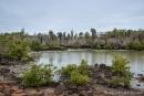 Lagune mit Riesenopuntien - Santa Cruz