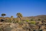 Südafrika - Goegap NR