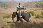 Der Mahut geht mit seinem Elefanten auf Tigersuche