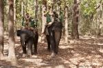 Auch die Elefanten haben keinen Tiger aufgespürt