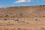Botswana - Kgalagadi TP