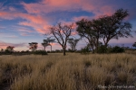 Kgalagadi Transfrontier Park - Mabuasehube Section